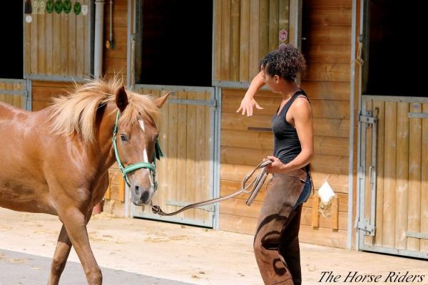 Reportage : métier ostéopathe équin