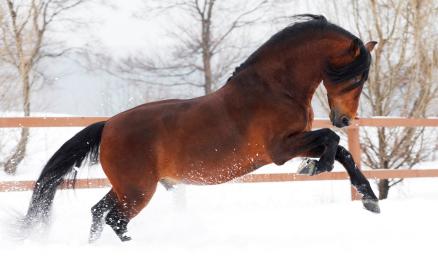 cheval-neige