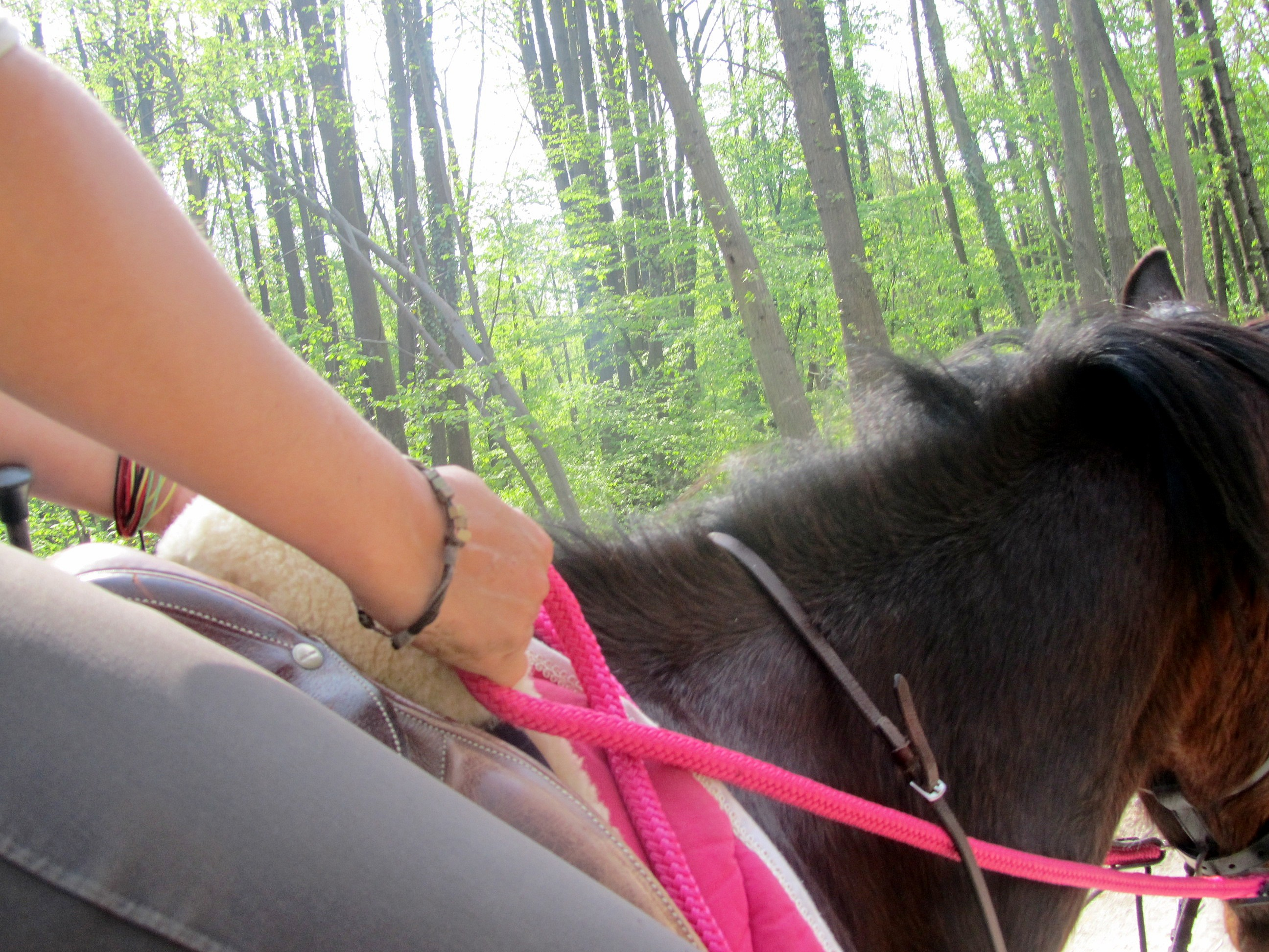 Horse&ropes