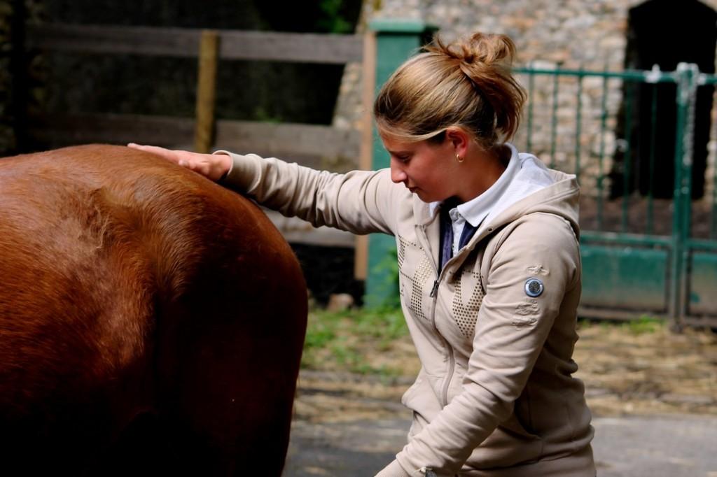 masseur équin