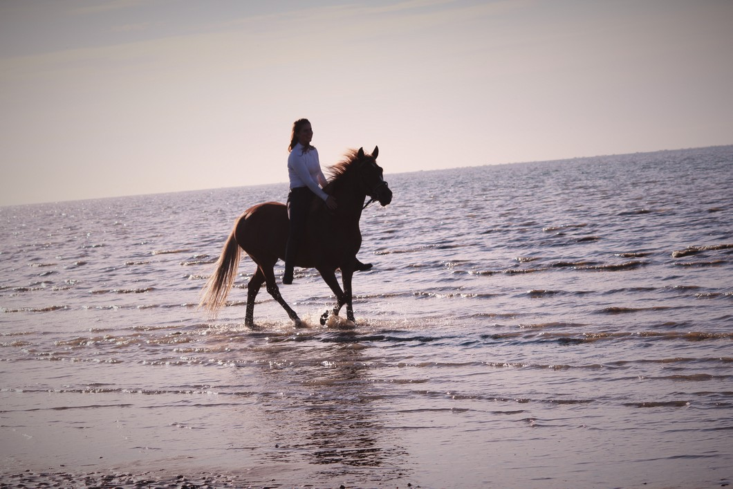 The Horse Riders : week-end à la plage