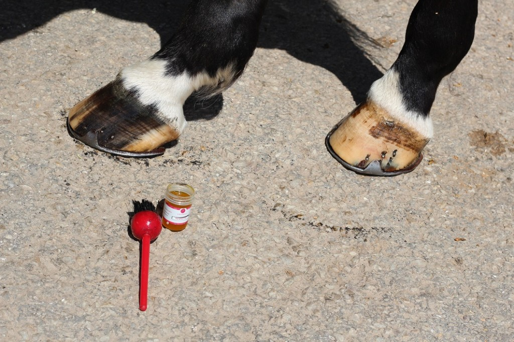 Kerafeet Oil by The Horse Riders