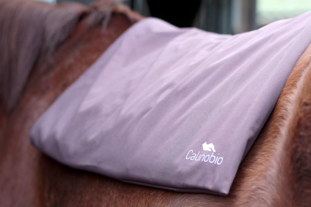 Calinobio by The Horse Riders