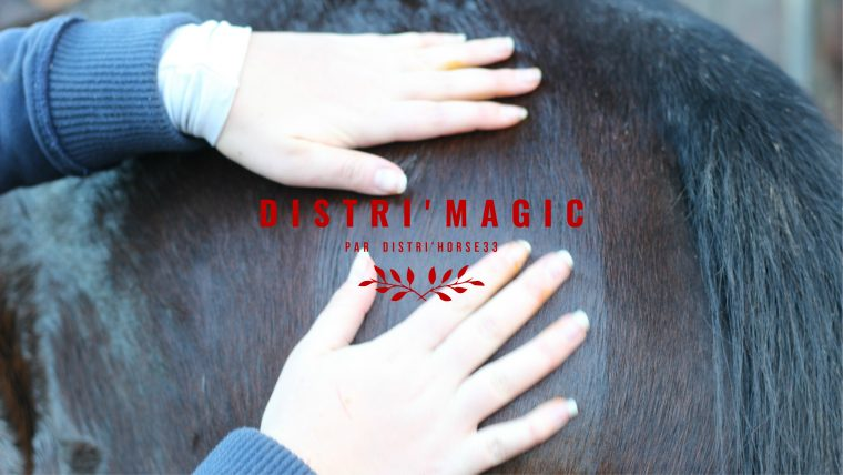 Distri Magic by The Horse Riders