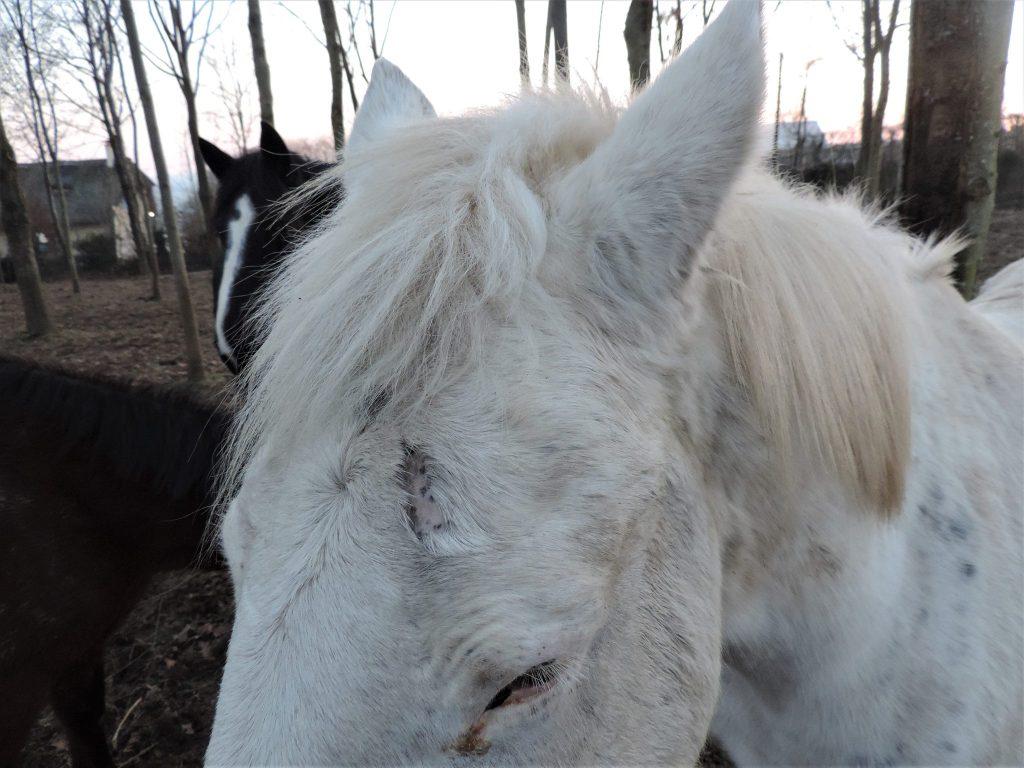 Ani Crème par Ani Marine ~ The Horse Riders