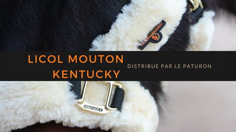 Licol Mouton kentucky
