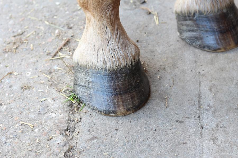 Baume soin pieds par les Equidés de Kala