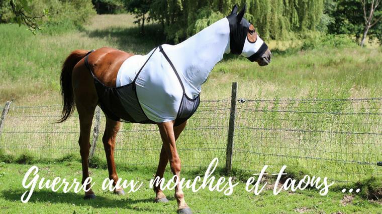 Lutter contre les mouches et les taons by The Horse Riders