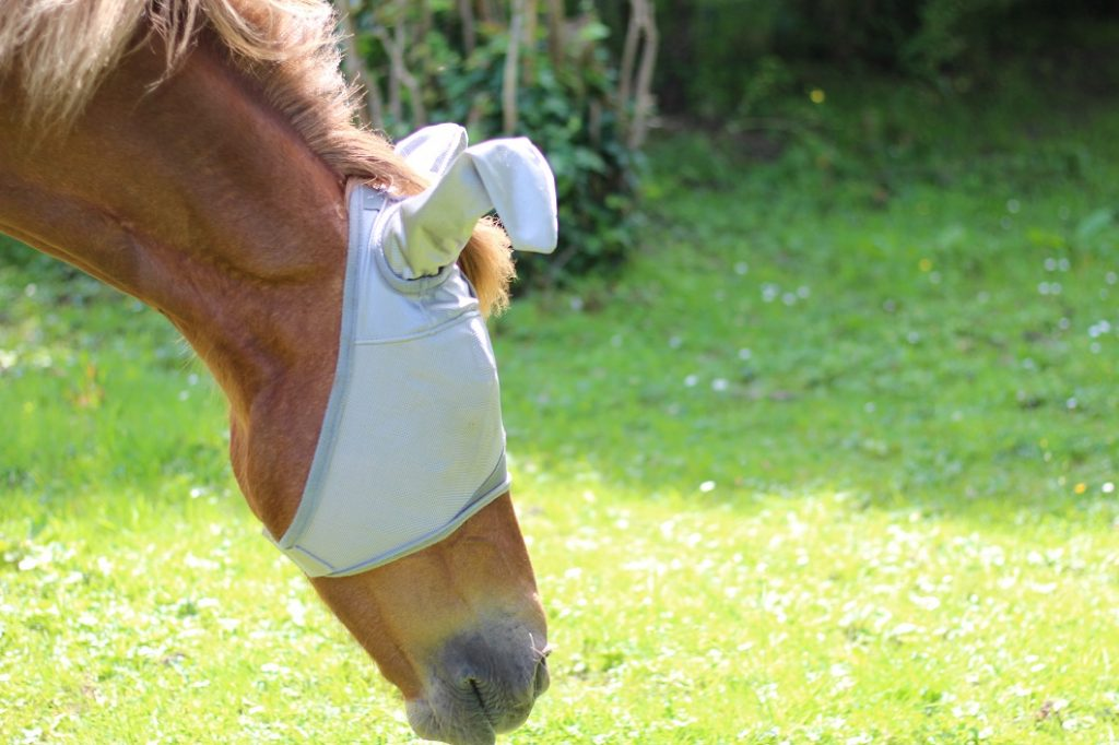 Protéger son cheval contre les mouches by The Horse Riders
