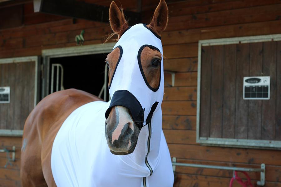 Protéger votre cheval contre les mouches et les taons by The Horse Riders