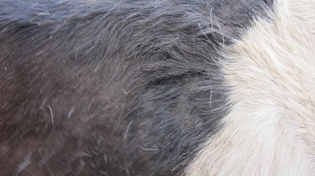 Spécial Soin Dermite par les Equidés de Kala by THE HORSE RIDERS