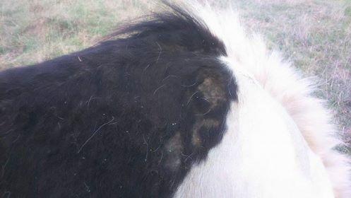 Spécial Soin Dermites par les Equidés de Kala by THE HORSE RIDERS