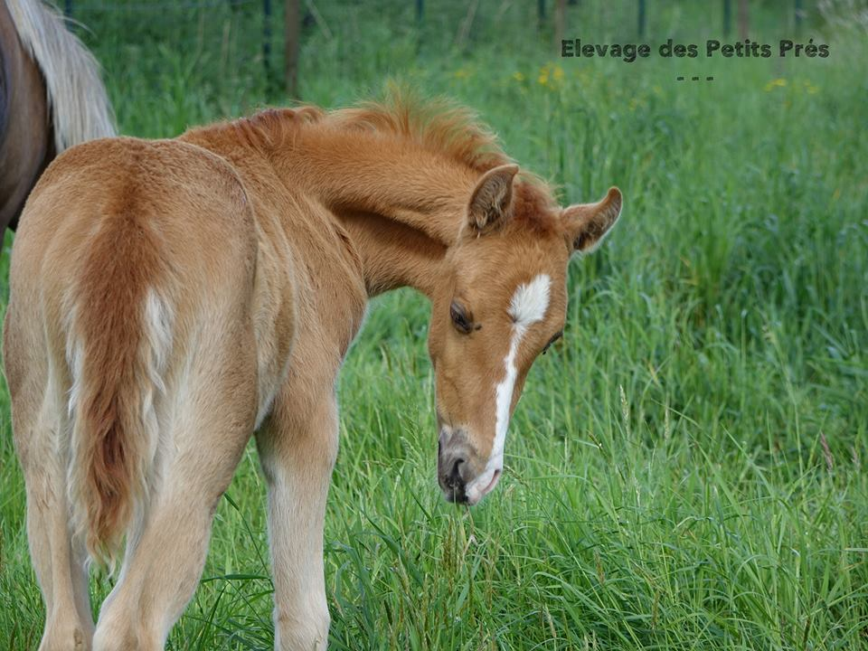 Elise THE HORSE RIDERS - Planner équestre